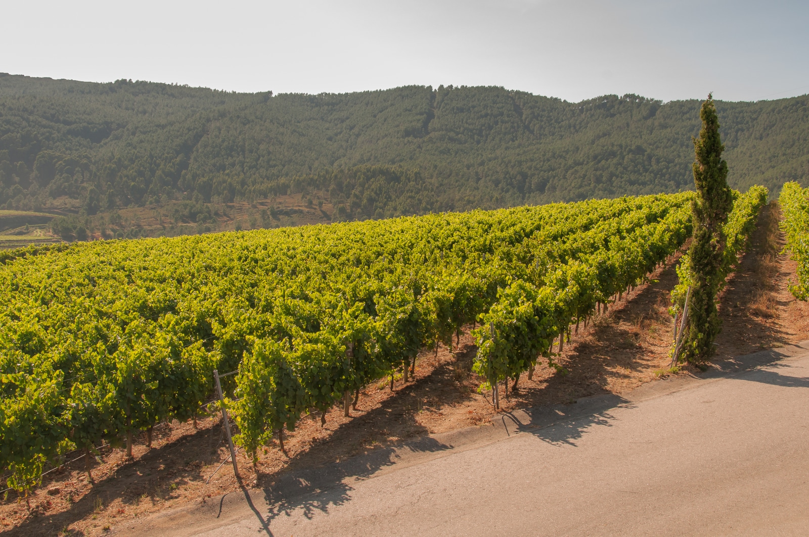 Where Does Albariño Come From