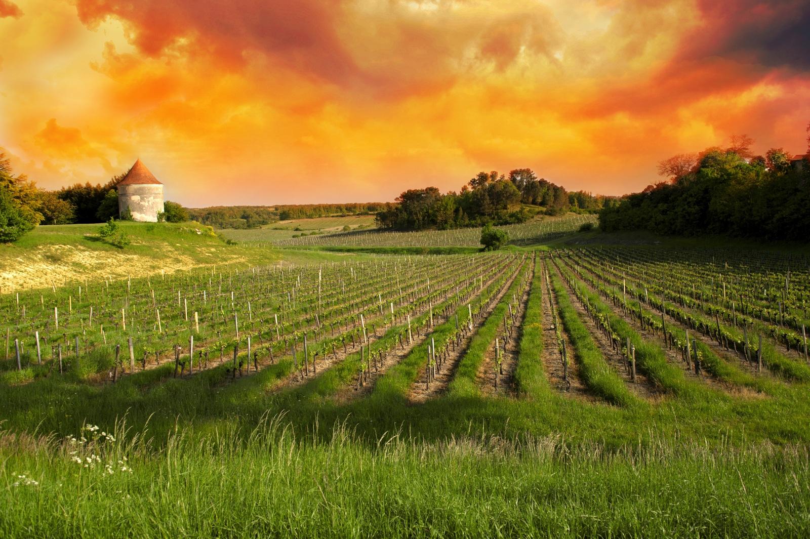 Where Does Cabernet Sauvignon Come From