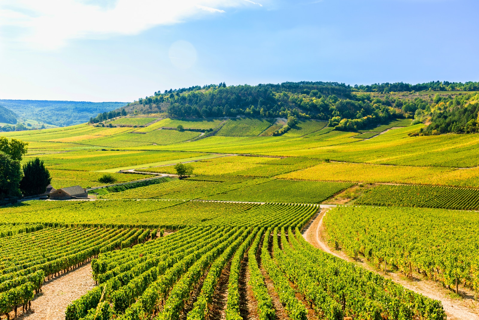 Where Does Chardonnay Come From