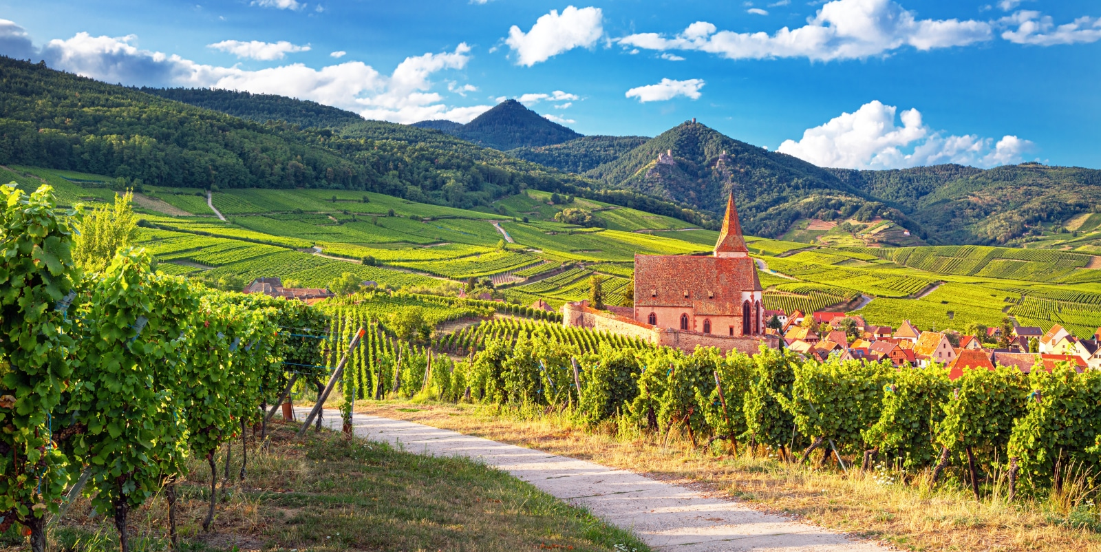 Where Does Gewürztraminer Come From