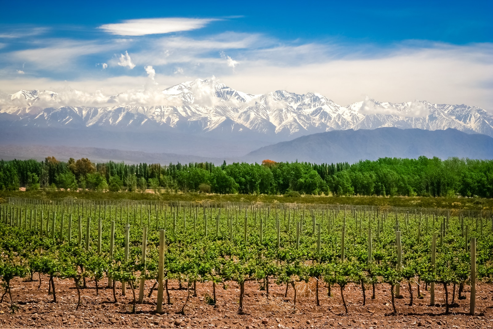 Where Does Malbec Come From