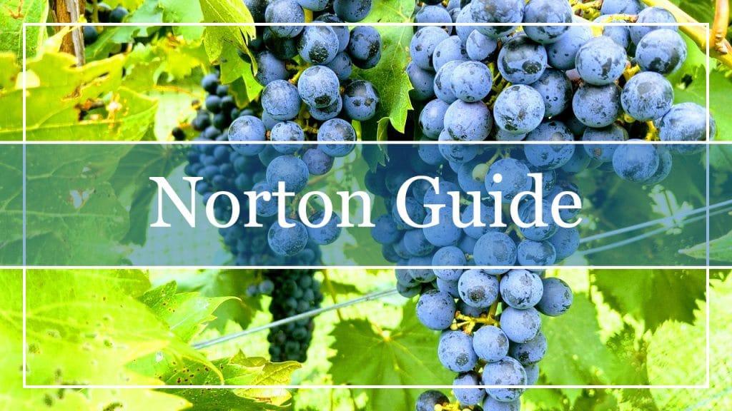 Norton Grapes
