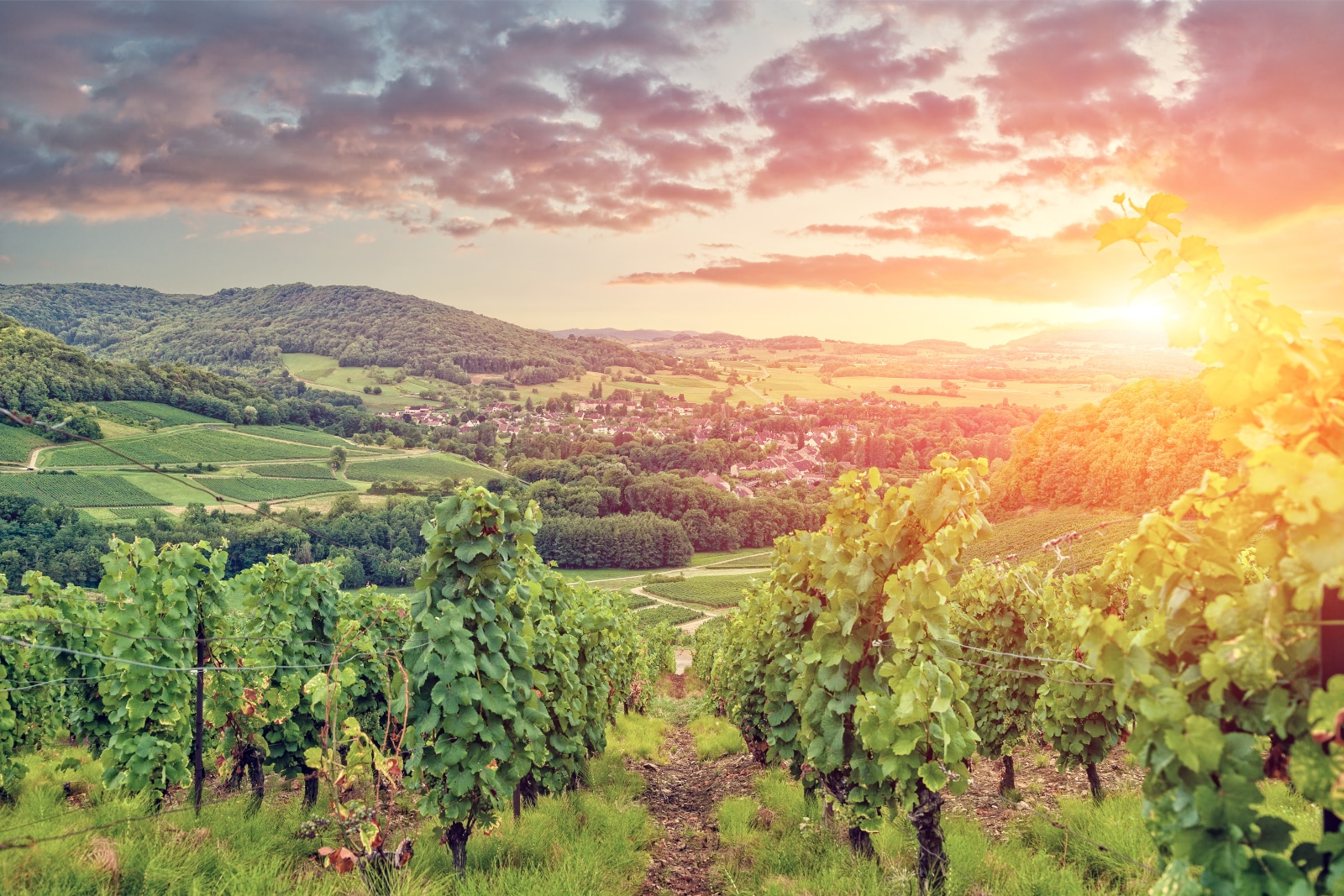 Where Does Pinot Gris Come From