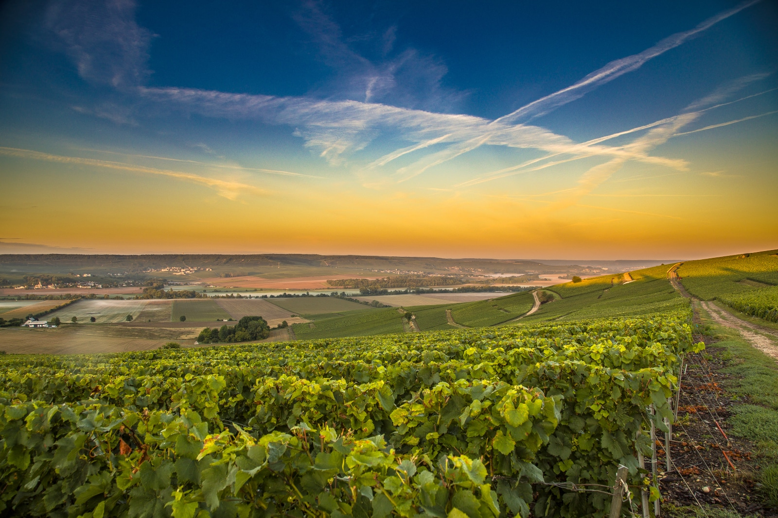 Where Does Pinot Meunier Come From