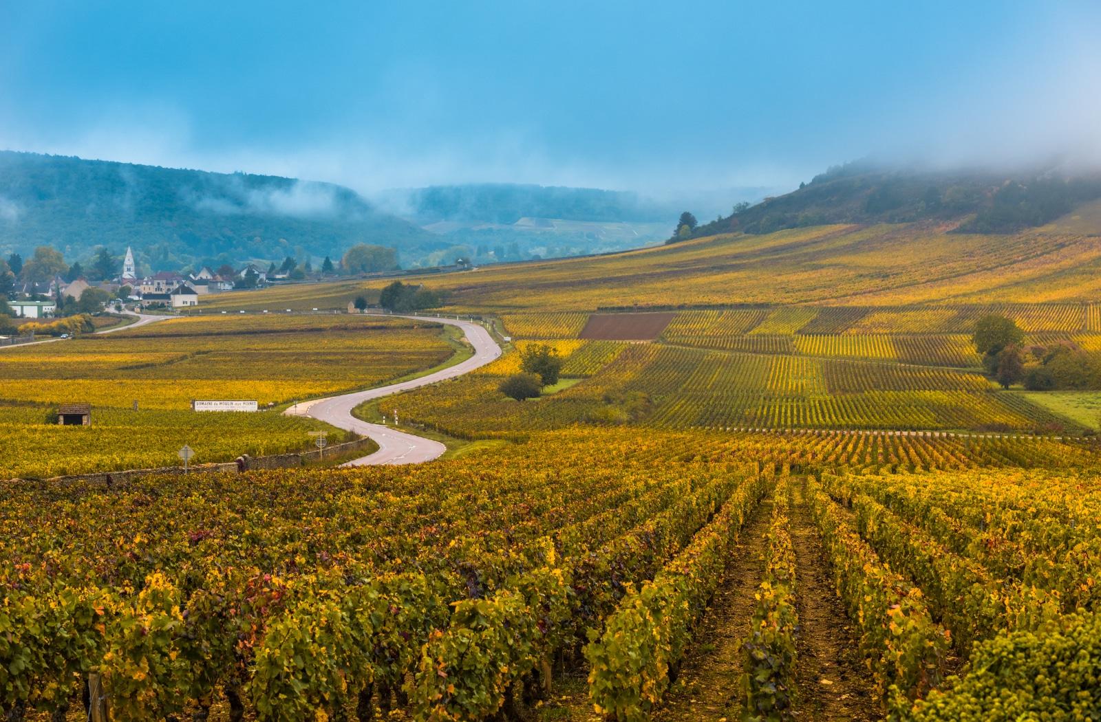 Where Did Pinot Noir Wine Originate