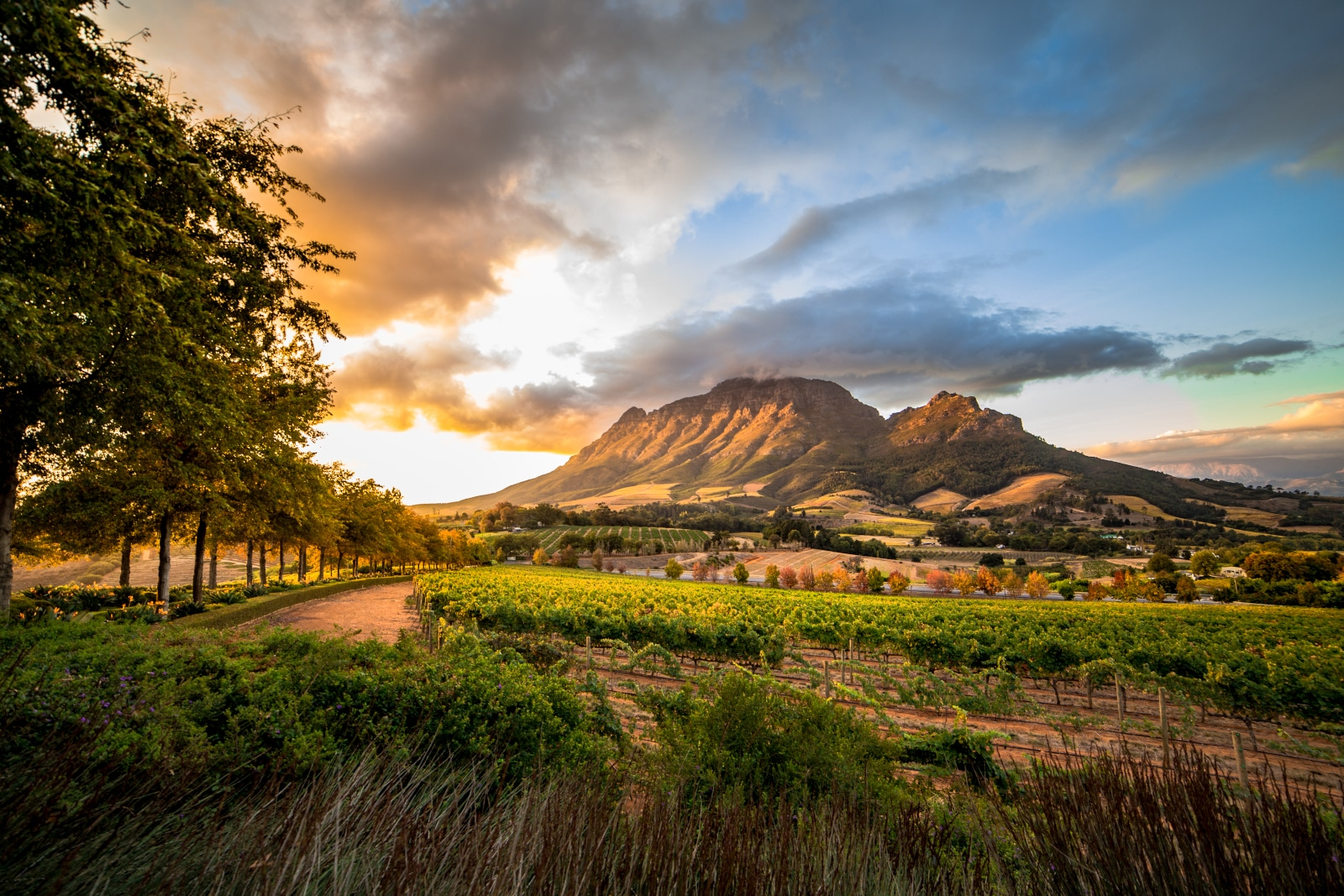 Where Does Pinotage Come From