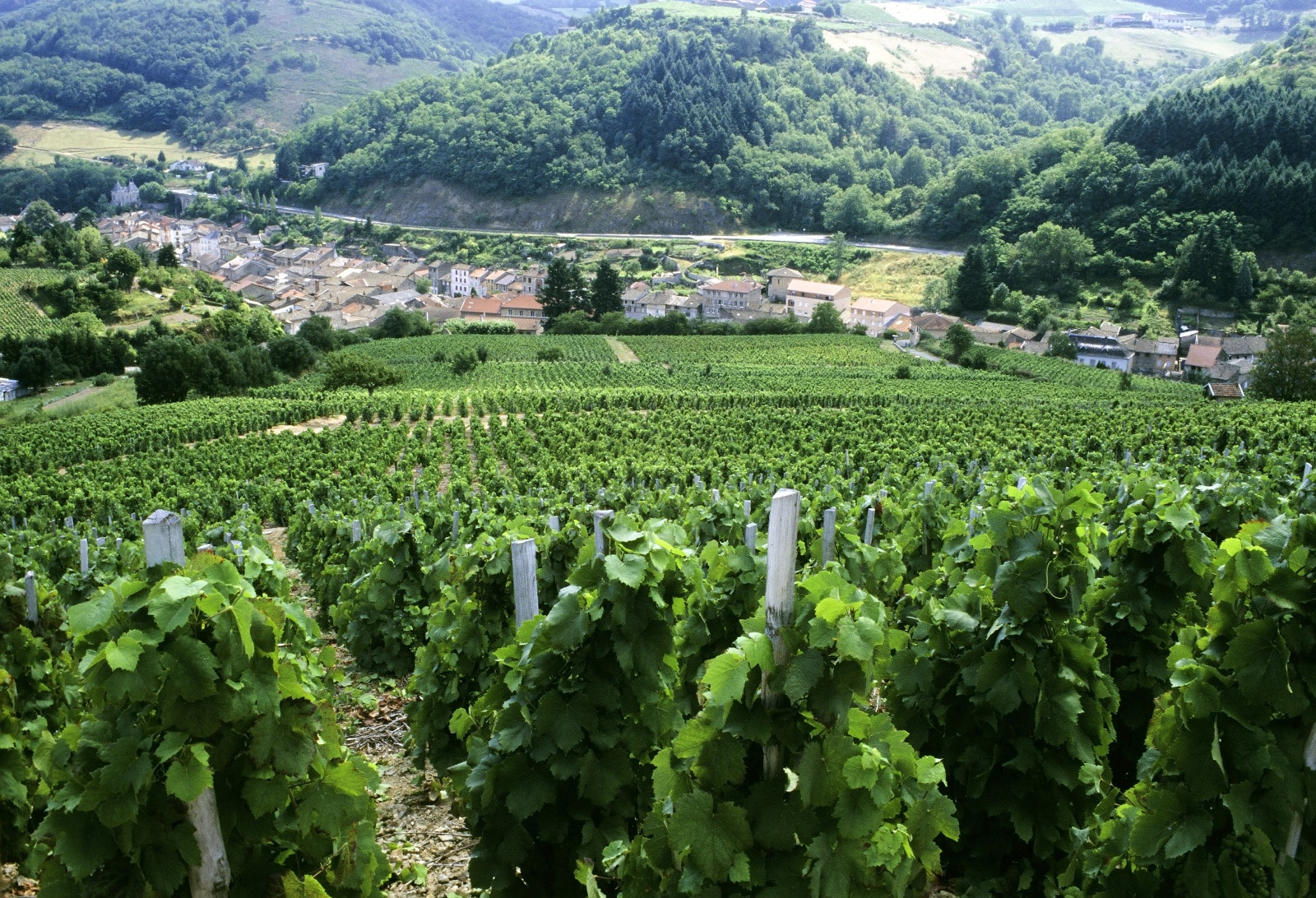 Where Does Roussanne Come From