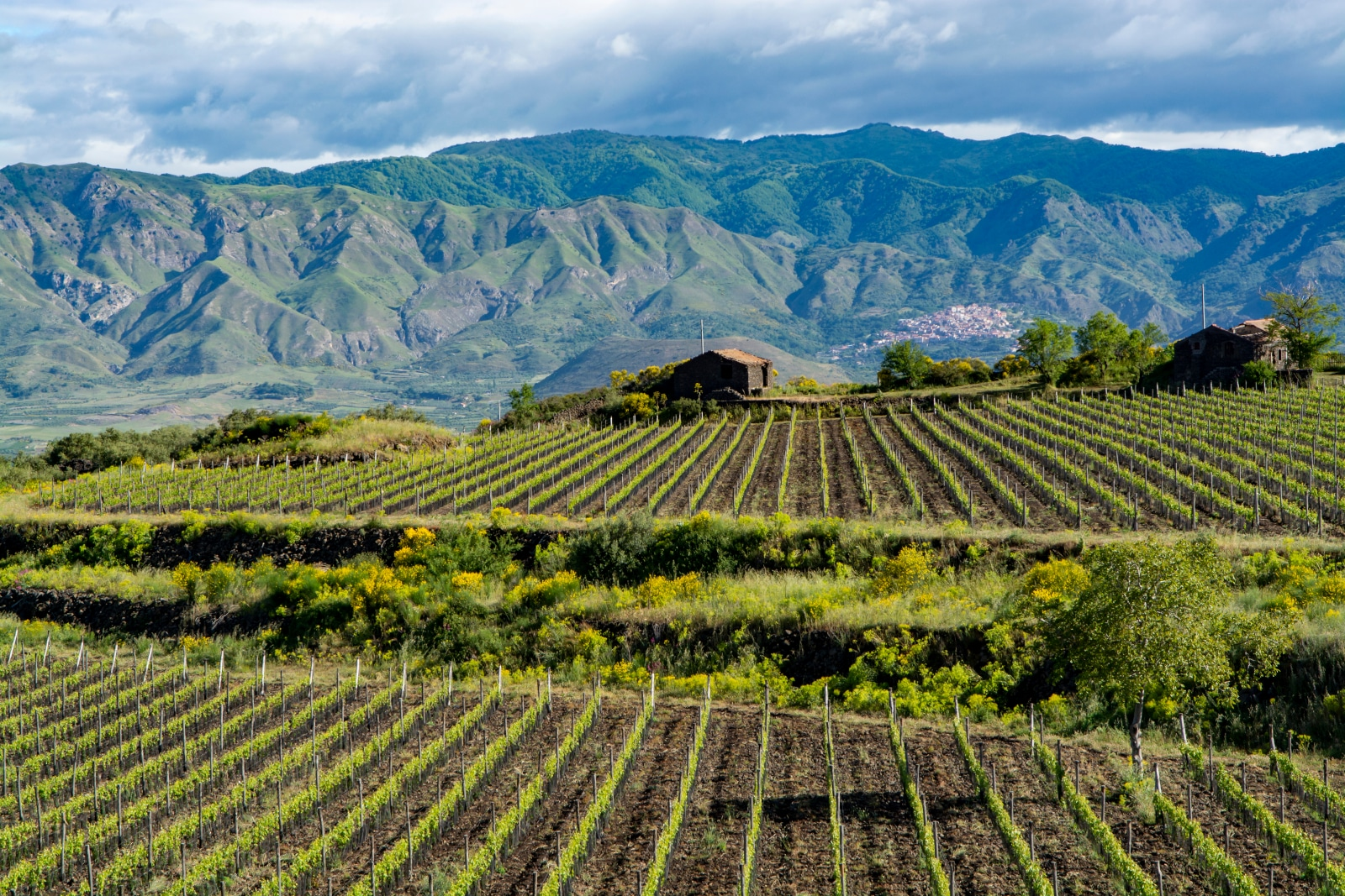 Where Does Syrah Come From