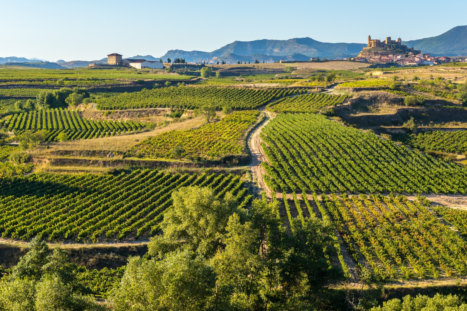 Where Does Tempranillo Come From