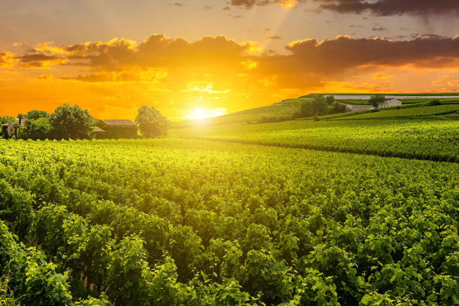 Where Does Trebbiano Come From