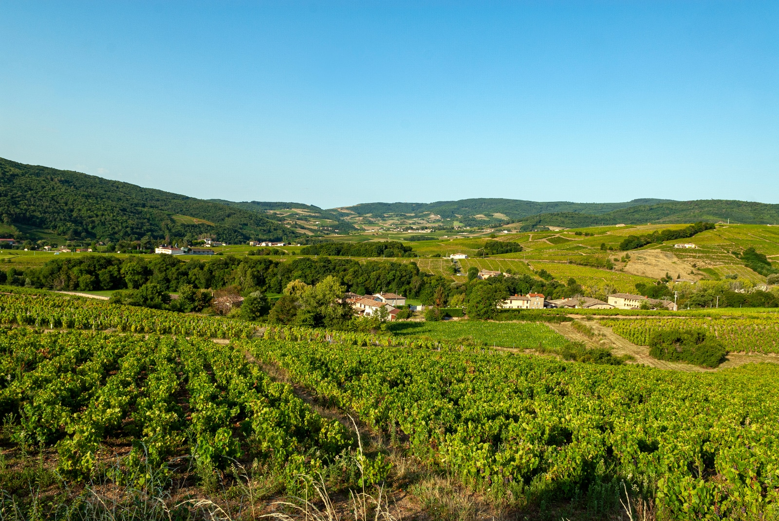 Where Does Viognier Come From