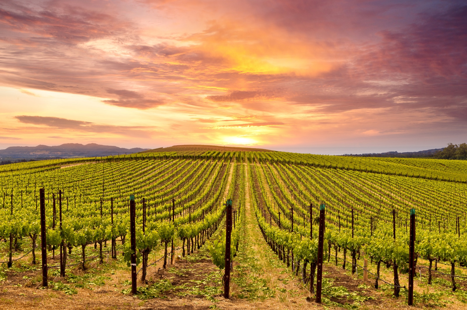 Where Does Zinfandel Come From