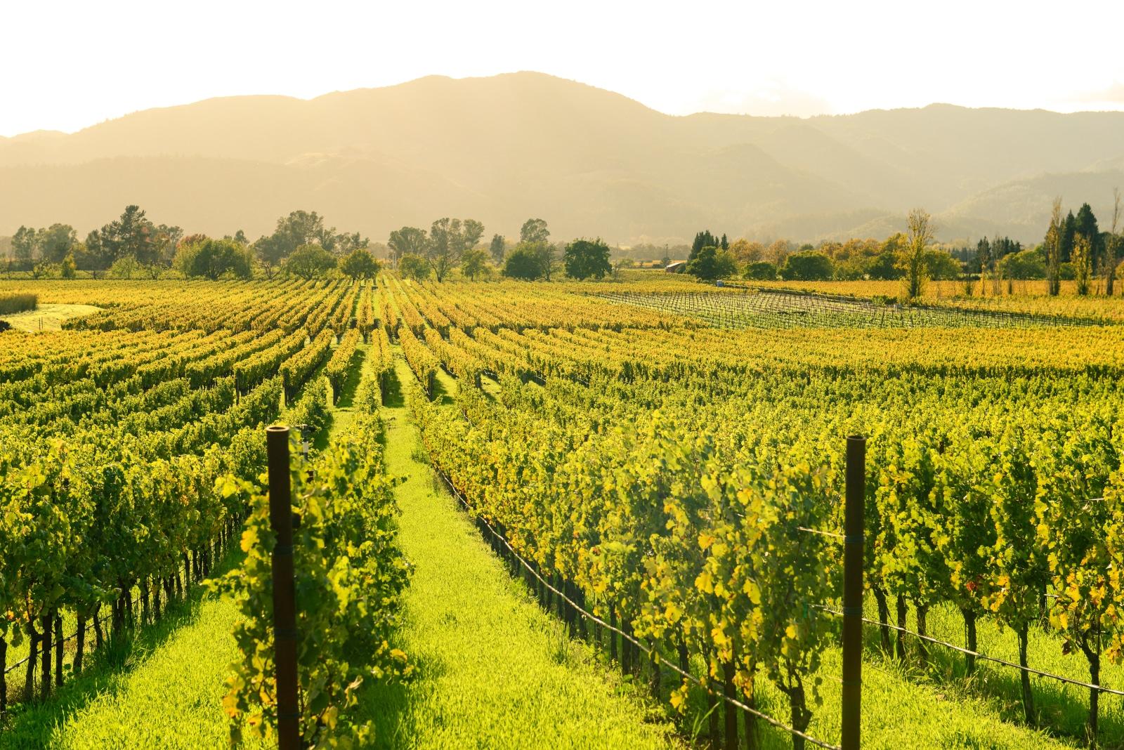Autumn in Napa Valley