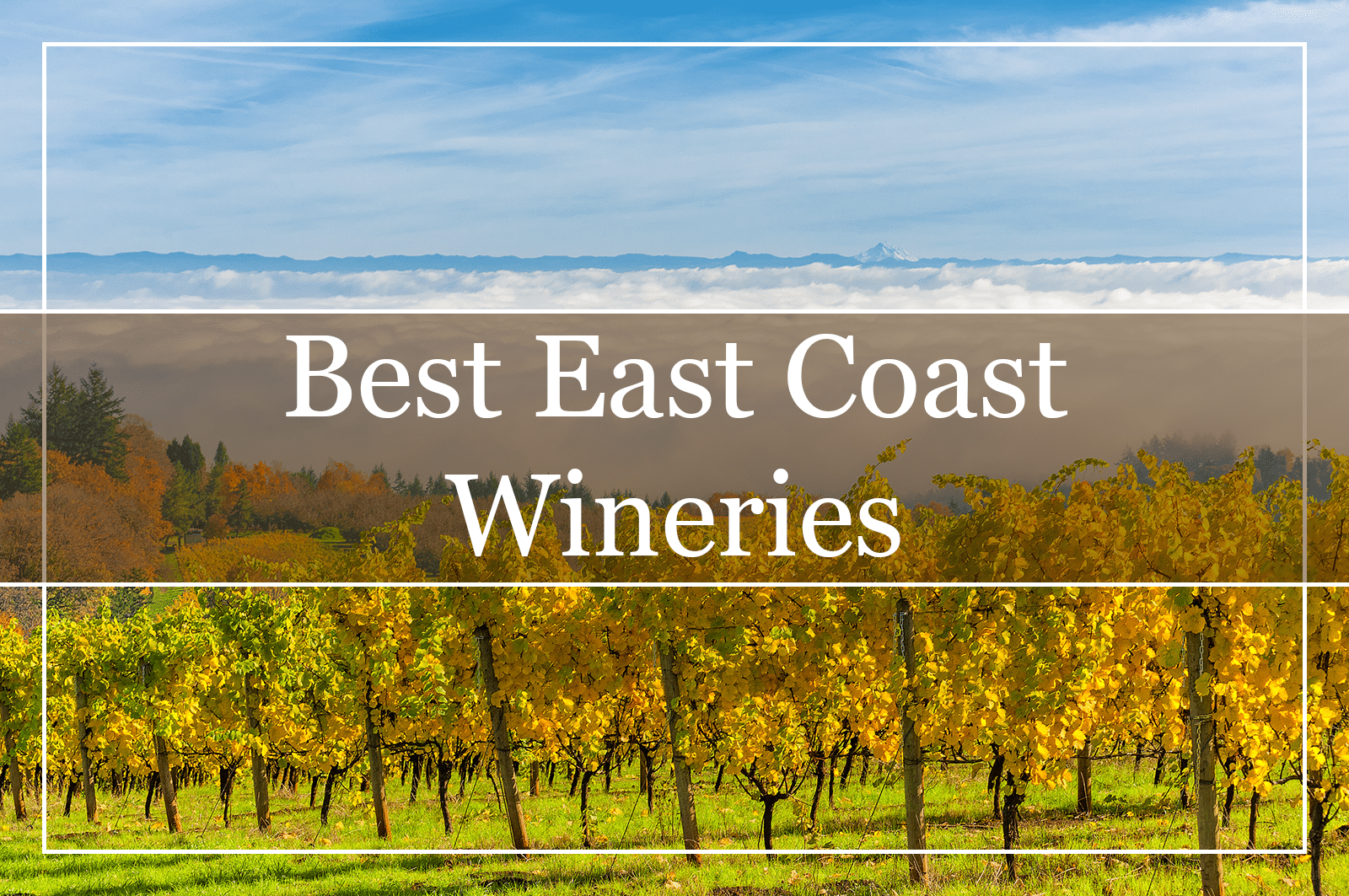 10 Best East Coast Wineries – According to Us