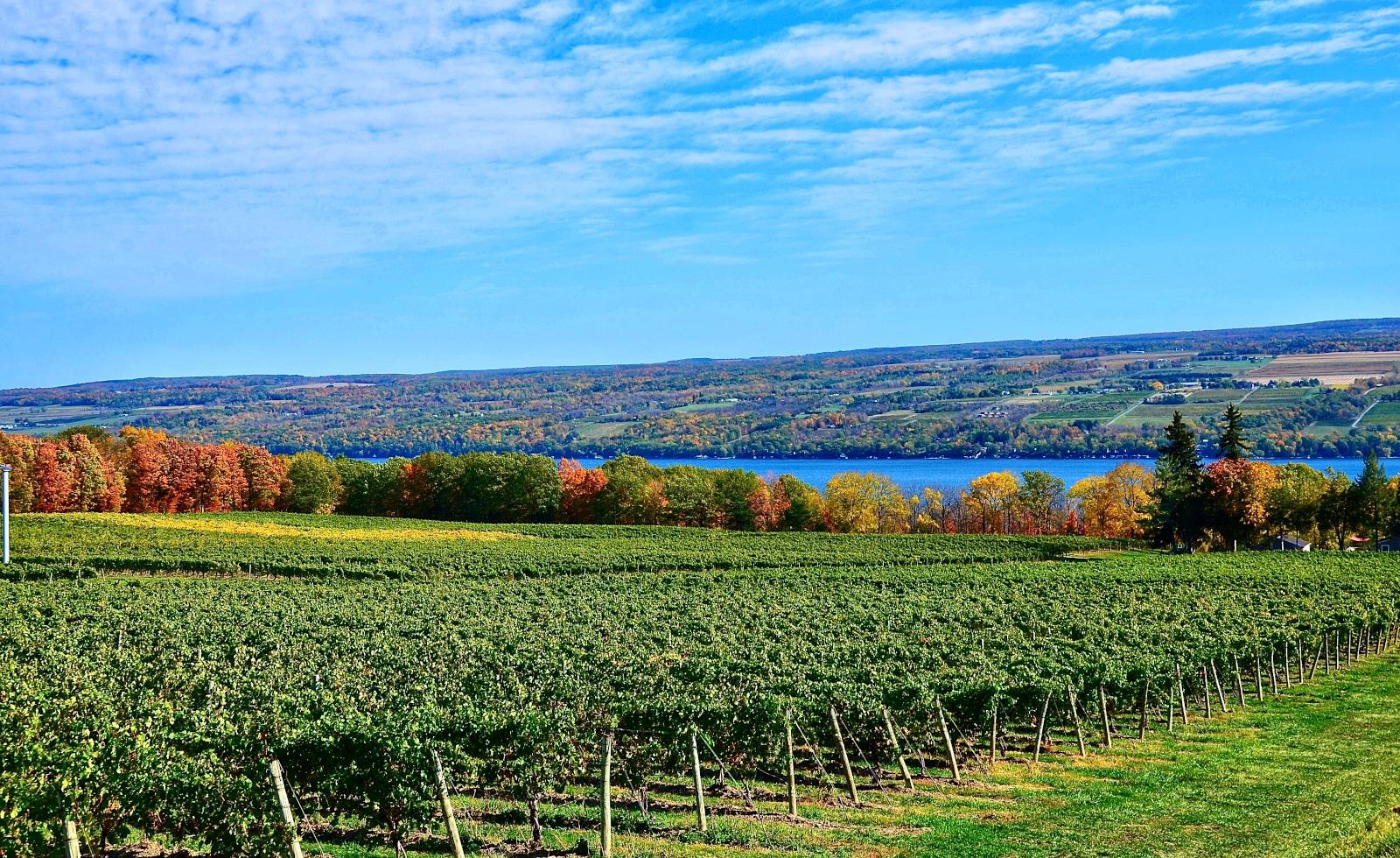 Finger Lakes Vineyard