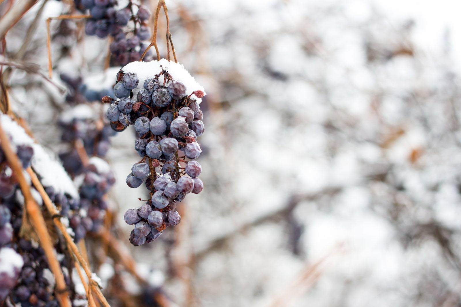 Frozen Wine Grapes