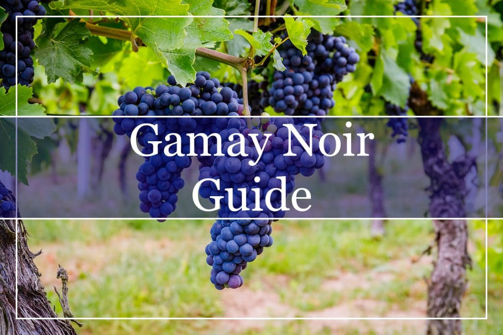 Gamay Noir Guide
