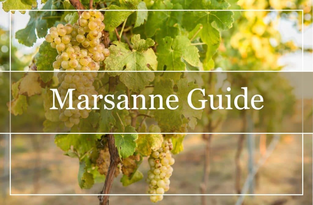 Marsanne Guide