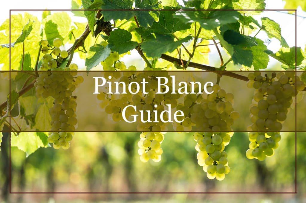 Pinot Blanc Guide