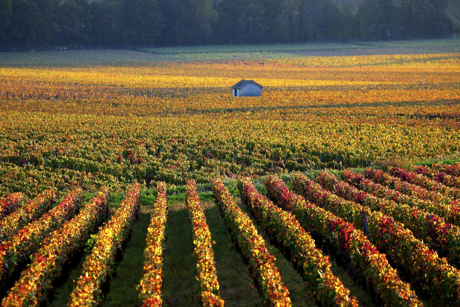 Pinot Blanc Savigny-les-Beaune Burgundy