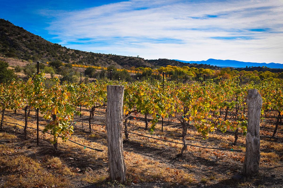 Sedona Vineyard