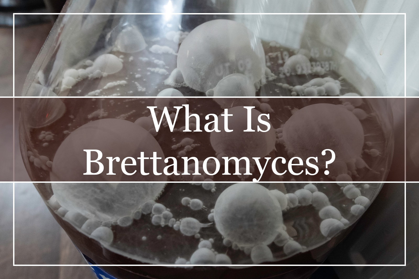 What Is Brettanomyces