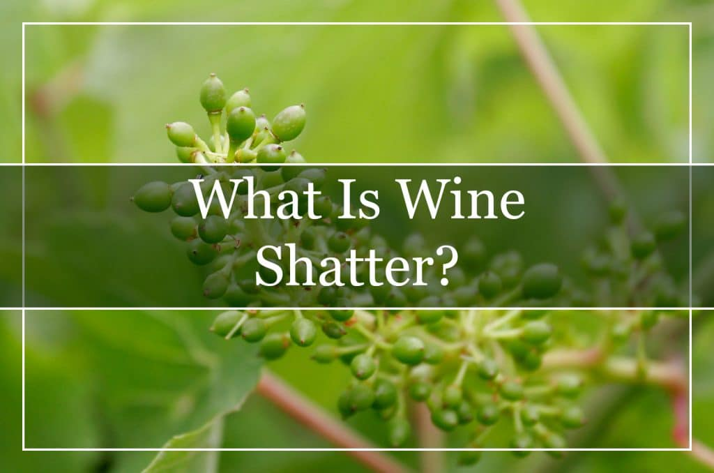 What Is Wine Shatter