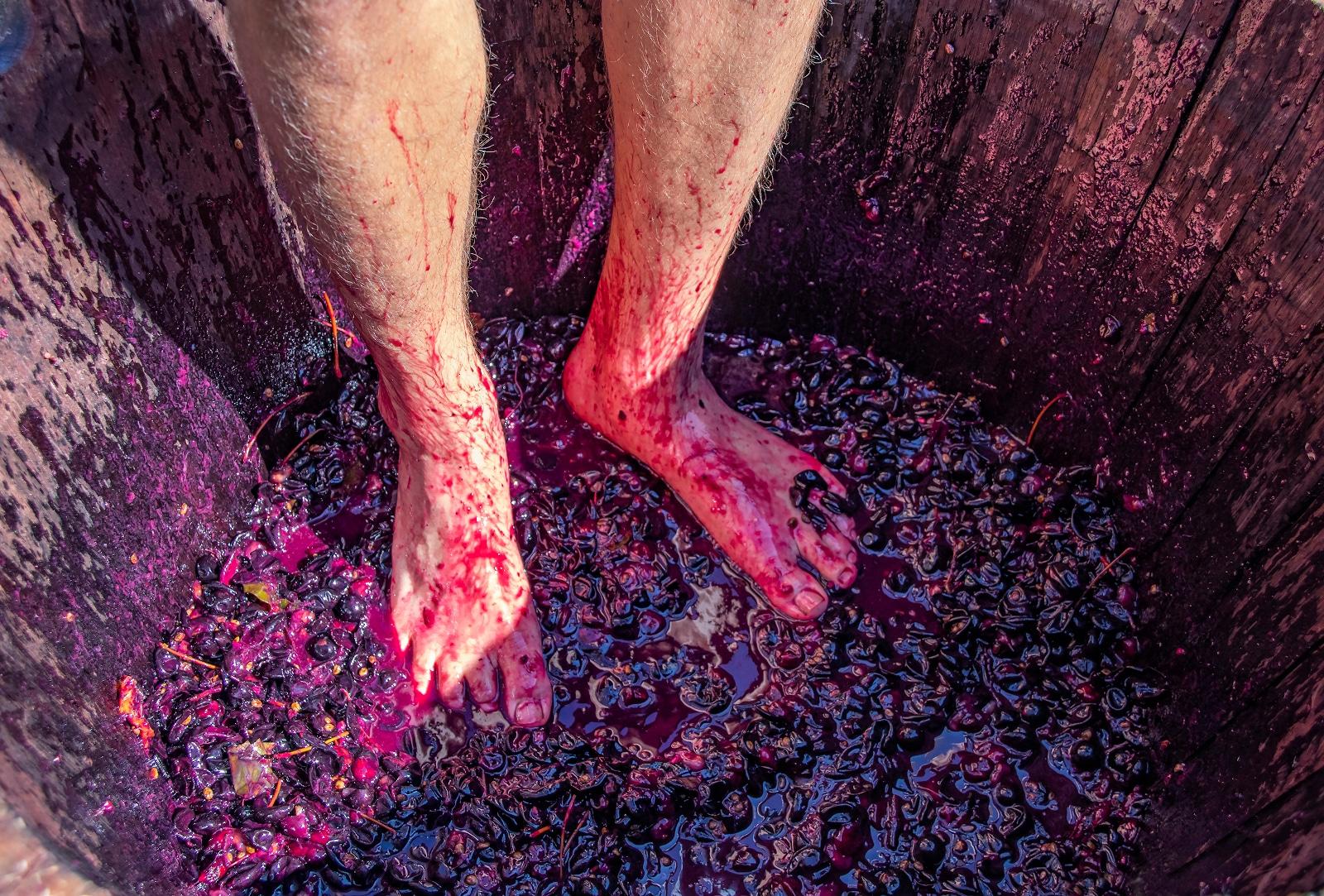 Wine Stomping